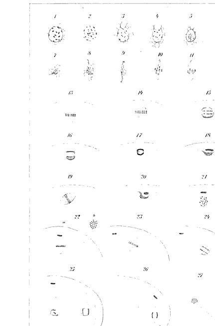 [merged small][ocr errors][merged small][ocr errors][ocr errors][ocr errors][ocr errors][graphic][ocr errors][merged small][ocr errors][ocr errors][ocr errors][ocr errors][ocr errors][ocr errors][ocr errors][ocr errors][ocr errors][table][graphic][graphic][ocr errors][ocr errors][ocr errors][ocr errors]