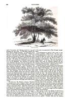 Página 960